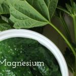 Magnesium – einer der wichtigsten Mineralstoffe